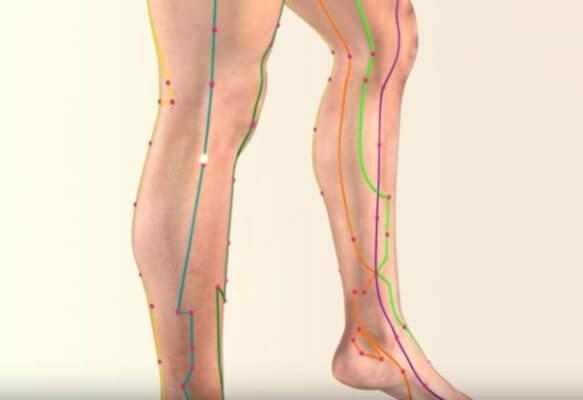acupressure, meridians in the legs